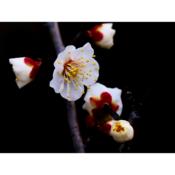 02_春の滴は枝を伝って.png